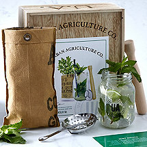 Grow Your Own Mojito Cocktail Kit